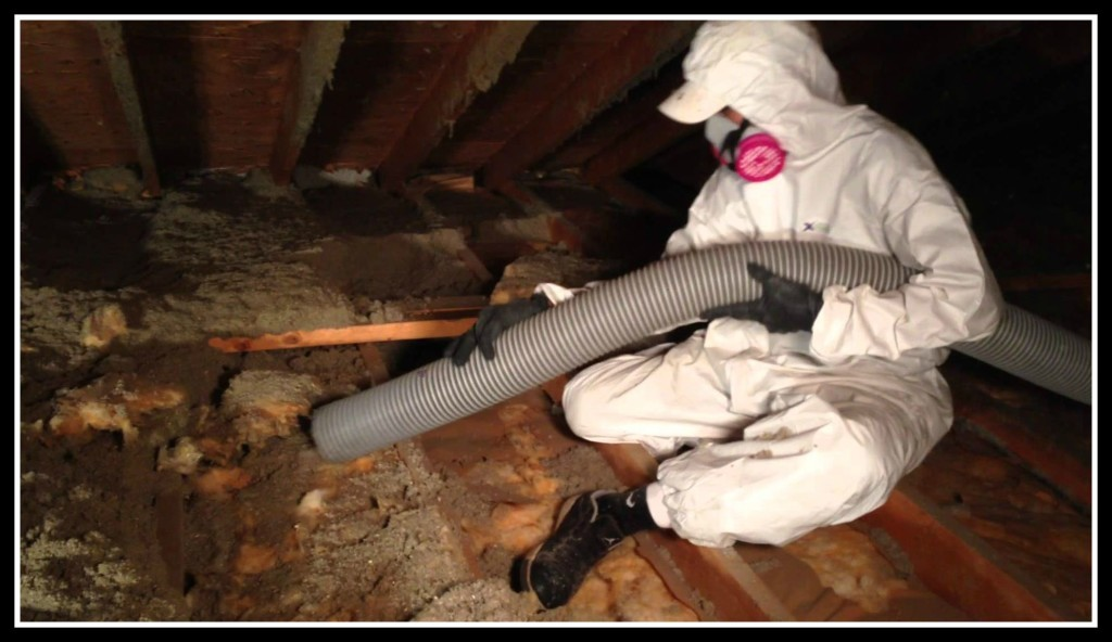 attic-cleaning-remove-cacuum-attic-orange-county-1024x592